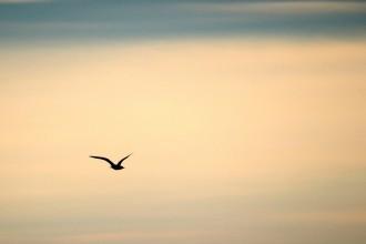 bird-189347_1280