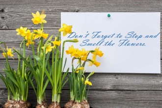 Message And Spring Daffodils
