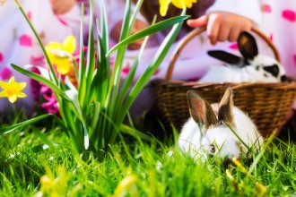 Living Easter bunny in a basket on a meadow in spring, children in the background