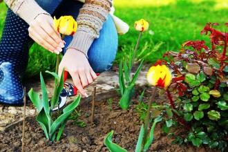 Gardening - woman cutting the flowers in the garden